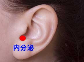 耳のツボ内分泌